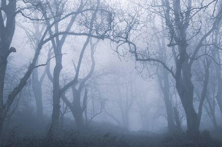 A muddy path through a spooky forest. On a foggy, winters day