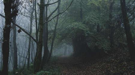 A path through a moody misty October woodland