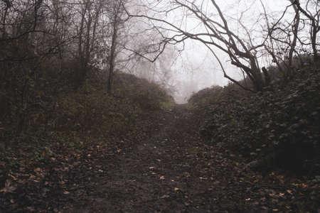 A path through woodland on a moody, foggy winters day.