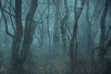 A spooky magical twisted forest in the English countryside on a foggy autumn day. With a grunge, artistic, edit