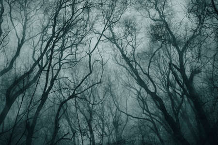 An atmospheric, moody concept. Looking up at a spooky forest of a trees on a foggy day. With a grunge, textured edit. Standard-Bild