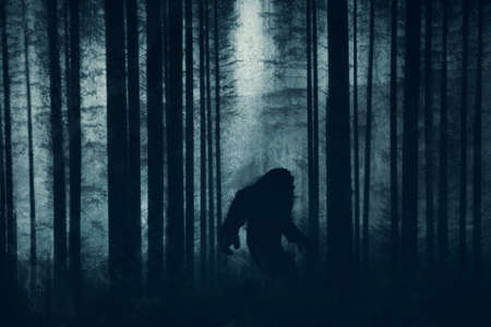 A dark scary concept. Of a mysterious bigfoot figure, walking through a forest. Silhouetted against trees in a forest. With a grunge, textured edit.