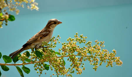 food stuff: Sparrow stood on a stem with full of grains nd food stuff Stock Photo
