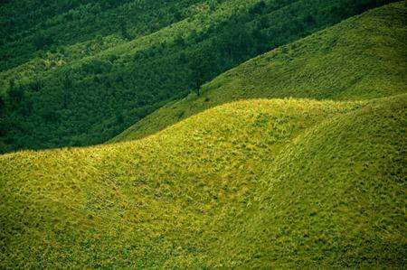 tengger: Green prairie and meadow landscape. Taken at Bromo Mountain, Tengger, east Java, Indonesia Stock Photo