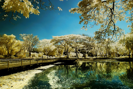 garden of eden: Golden tree garden beside lake and wooden bridge Stock Photo