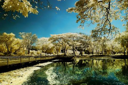 Jardin d'or d'arbre au bord du lac et le pont en bois Banque d'images