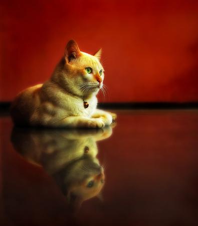 clean floor: Kitten lying on clean floor Stock Photo