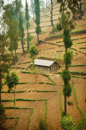 tengger: Single house on cultivated land. Taken at Bromo Tengger, east Java, Indonesia Stock Photo