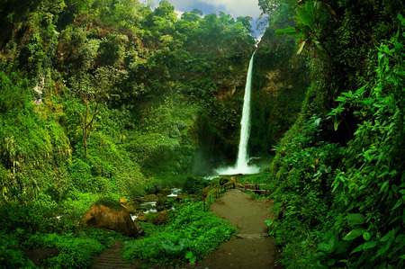 jungle: View of waterfall and greenish forest landscape, Taken at Rainbow Waterfall a.k.a. Coban Pelangi, Malang, east Java, Indonesia