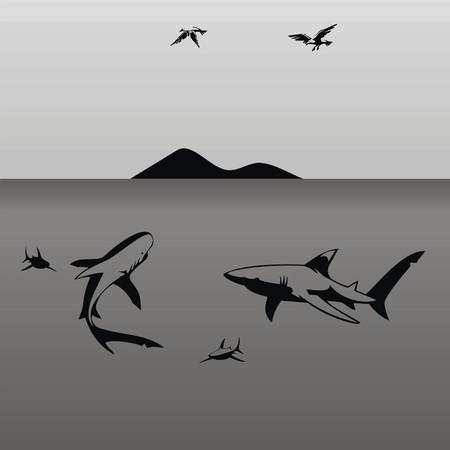 sharks Vector