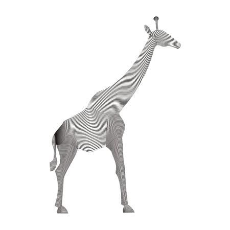 karkas: giraffe karkas Stock Illustratie