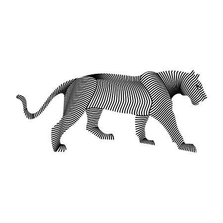 karkas: tijger karkas
