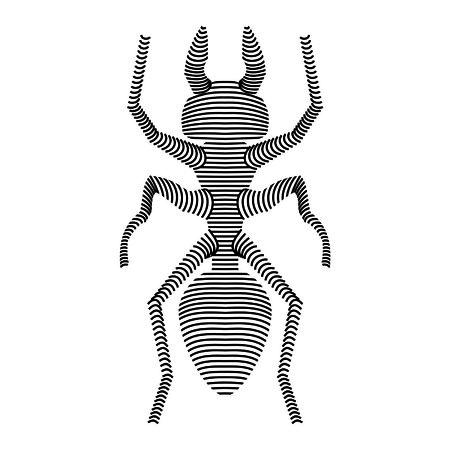 carcass: carcass ant