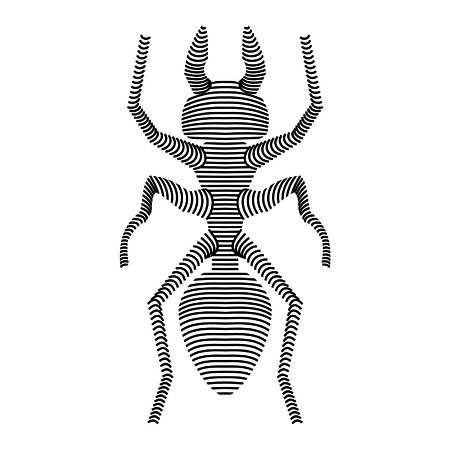 carcasse: carcasse fourmi