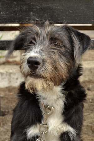 watchman: dog