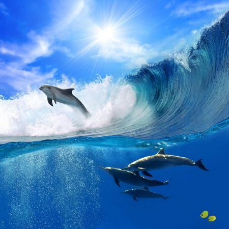 the ocean: Beautiful Dolphins