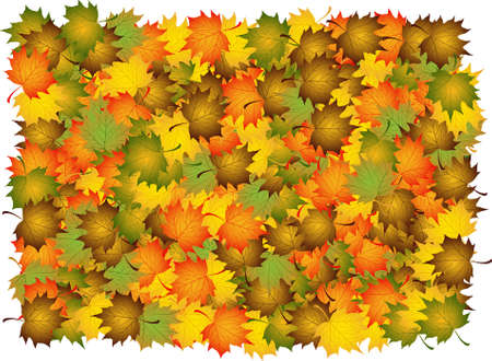 Composite of various autumn leaves to backgrounds Stock Photo - 2036977