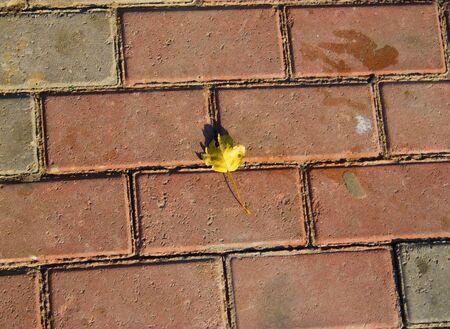 pavement: Yellow leaf on dirty pavement Stock Photo