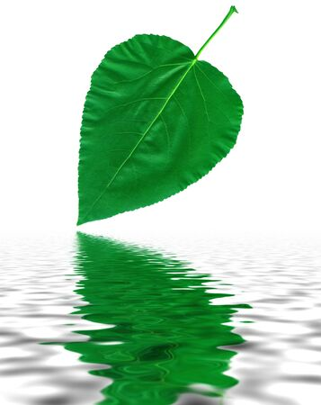 saturate: Big green leaf cottonwood, poplar with reflection in water