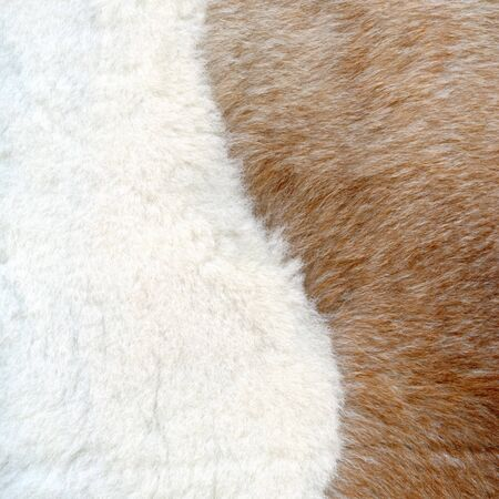 Brown and white fur texture to background Stock Photo - 4035919