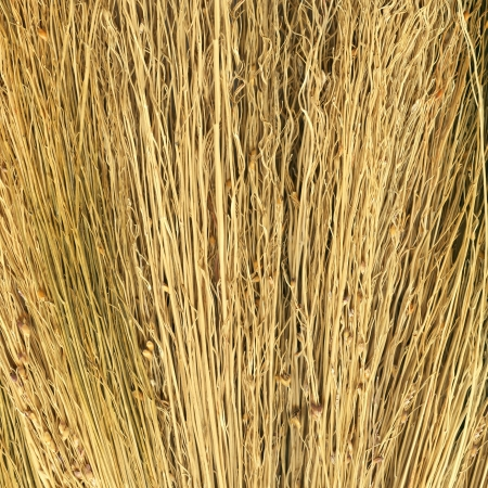 Hay texture to background photo