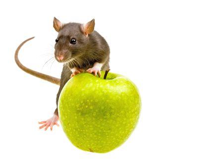 rata: Funny ratas y manzana verde sobre fondo blanco aisladas