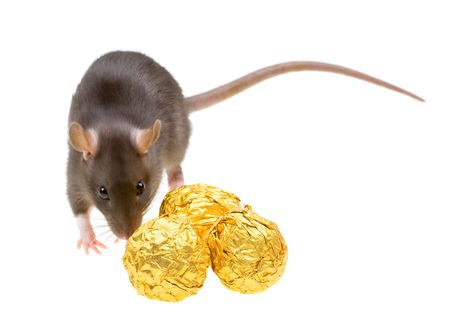 Funny rat and chocolate candies isolated on white background Stock Photo - 4784859