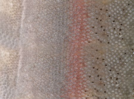 Close-up hq fish scales to background photo