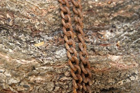Close-up old rusty chain on a tree to background photo