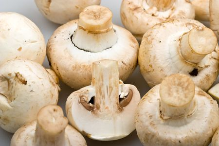 fungous: Close-up  mushrooms - cep to background