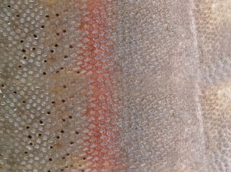 Close-up hq fish scales to background
