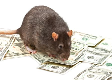 Funny rat accountant standing over american dollars Stock Photo