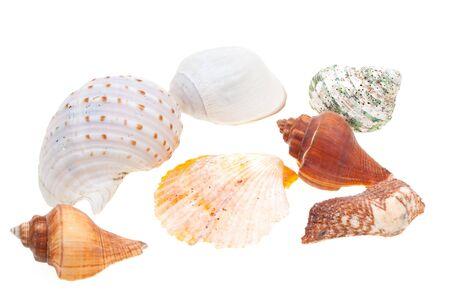 Beautiful seashells isolated on white background Stock Photo - 6883712