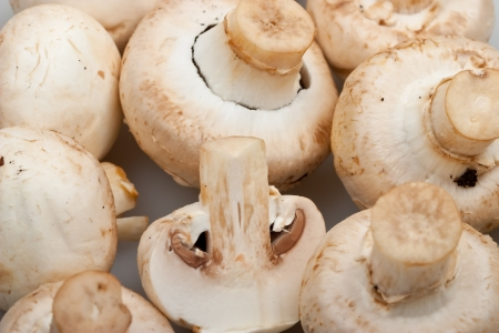 Close-up  mushrooms - cep to background Stock Photo - 6983926