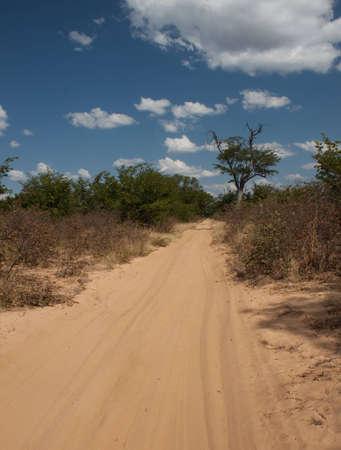 botswana: Africa, Botswana - Kalahari track