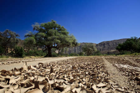 riverbed: Africa, Namibia - dry riverbed in Kaokoland Stock Photo
