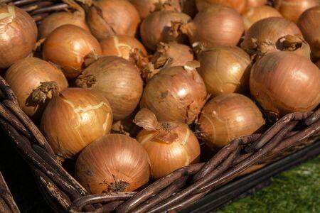 cebollas: Cebollas en la cesta