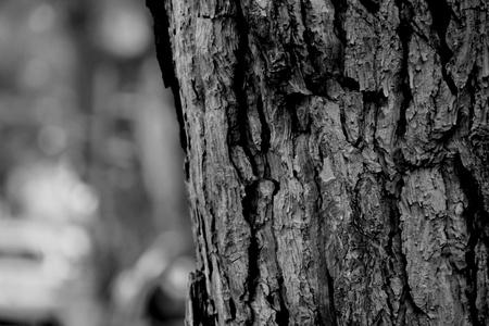 albero: corteccia