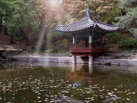 asian house plants: Pond