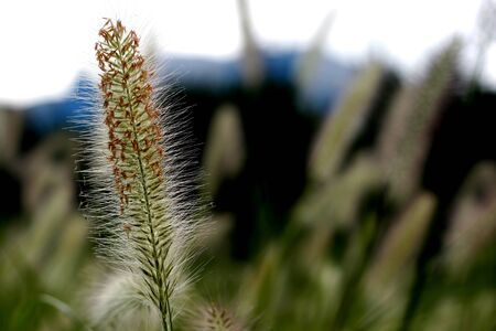 ragsac: Grass Stock Photo