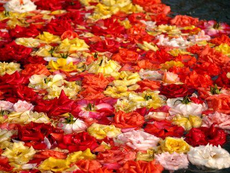 ragsac: Sea of Roses