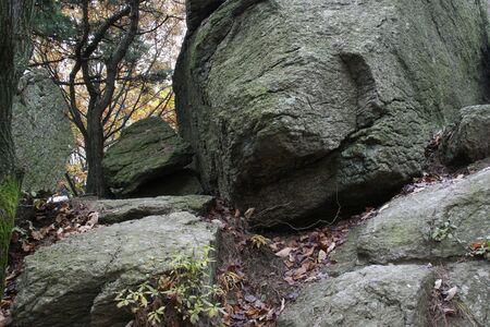 Basalt Rock Surface  photo