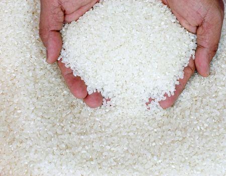 Asian White Rice  photo
