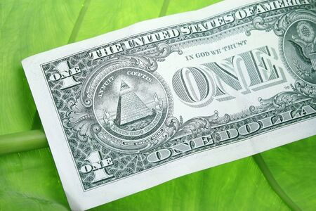 One Dolar Bill on a green leaf concept Stock Photo - 3436160