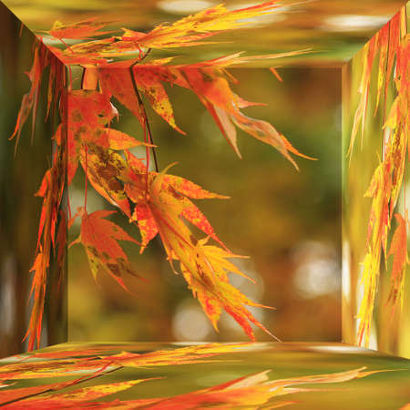 red japanese maple in october autumn month in 3d box photo