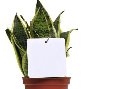 Potted plant isolated in white background with blank white label for your text. photo