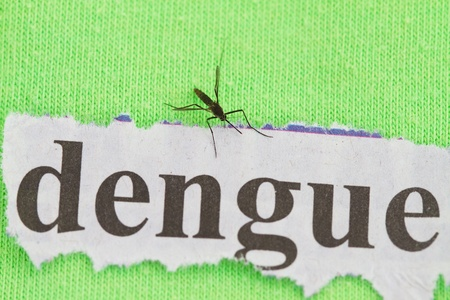 close up on a mosquito  with dengue cutout background Stock Photo