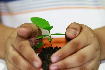 Boy holding a young plant - concept for environment awareness  photo
