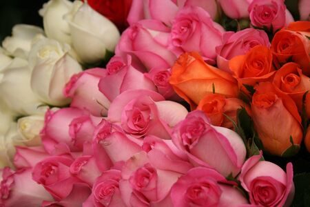 Large, Ecuadorian roses in red, pink and white for sale at the outdoor vegetable and craft market in Otavalo, Ecuador Banco de Imagens
