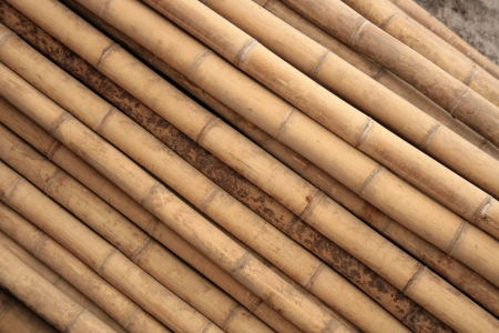 Long, straight bamboo poles are stacked for sale at a local sawmill in Cotacachi, Ecuador Imagens